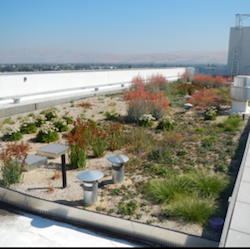 An image of a rooftop garden full of vegetation