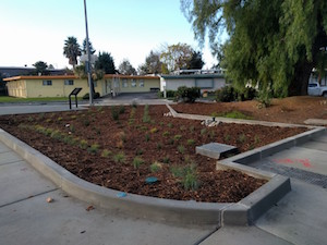 A garden full of mulch and other vegetation, surrounded by sidewalk