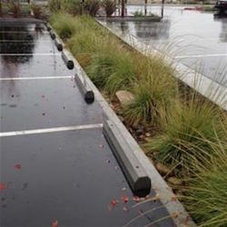 A wet parking lot, next to a small garden serving as a rain garden