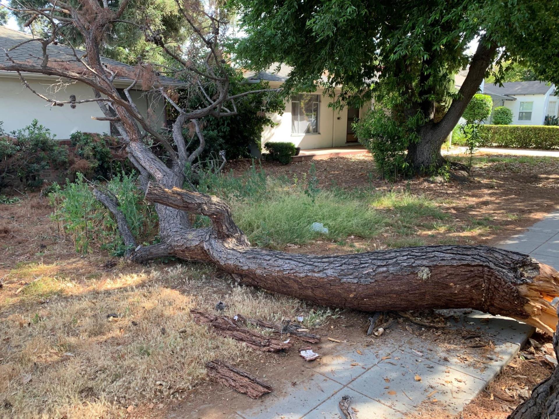 Un arbre tombé s'étendant sur le trottoir et la cour avant d'une maison
